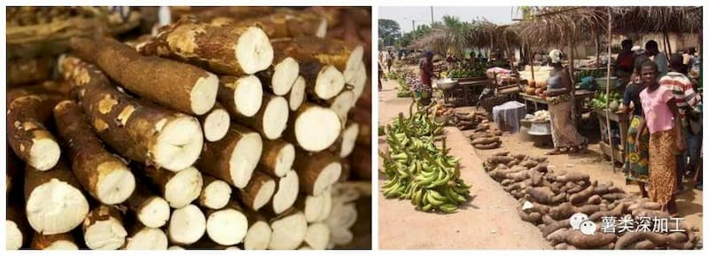 "China-Cameroon ""Belt and Road"" Promotes Cooperation and West African Customers Visit the China with Cameroon President and Visit the Cassava Flour Equipment"
